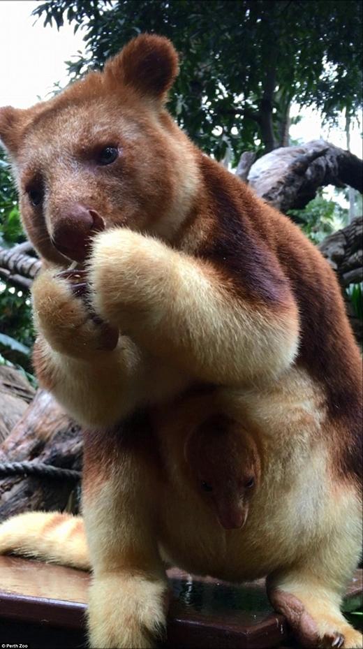Cái tên Mian được đặt theo tên một tỉnh ở Papua New Guinea.