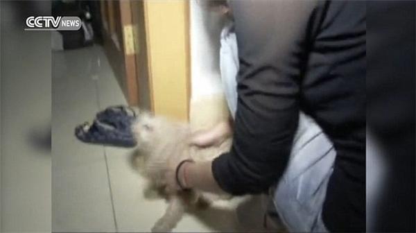 Tuy nhiên, cuối cùng thì công cuộc giải cứu cũng đã thành công tốt đẹp.Chú chó nhỏ mừng rỡ được thấy lại chủ mình. (Ảnh: Internet)