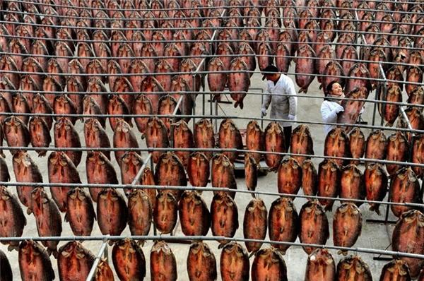 Cá khô trong một cơ sở chế biến ở ngoại thành thành phố Hàng Châu, tỉnh Chiết Giang.