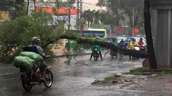Cây đổ chắn ngang đường Nguyễn Thị Minh Khai, Q1. (Ảnh: Đ.T)