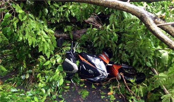 Nhánh cây xanh gãy đè lên xe máy trên đường Lê Duẩn. (Ảnh: Lê Phan)