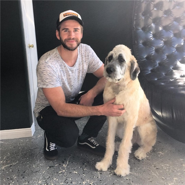 Chú chó Dora được Miley giải cứu từ Trung tâm Chăm sóc và Giải cứu Thú nuôi Wylder. (Ảnh: Internet)