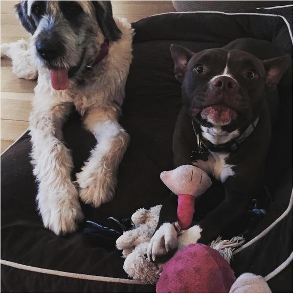 2 chú chó đáng yêu được Liam nhận nuôi. (Ảnh: Internet)