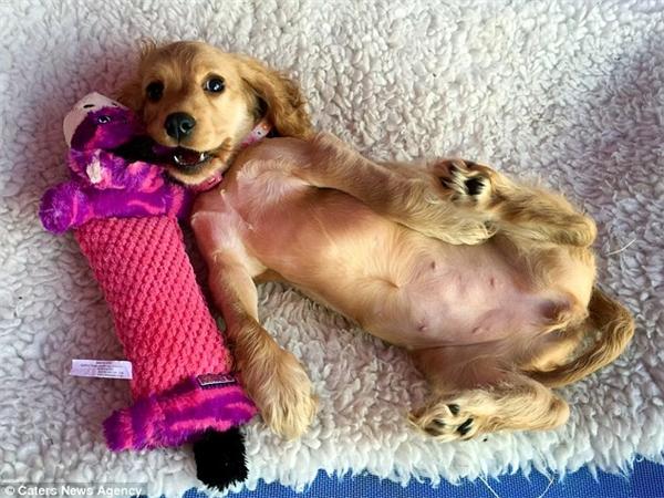 Tội nghiệp chú cún cực xinh xắn nhưng có đôi chân trước dị dạng