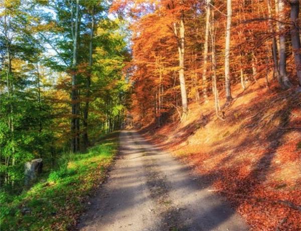 Khoảng cách giữa mùa thu và mùa hạ chỉ là một đoạn đường mòn, nhưng bao giờ mới đến?(Ảnh Internet)