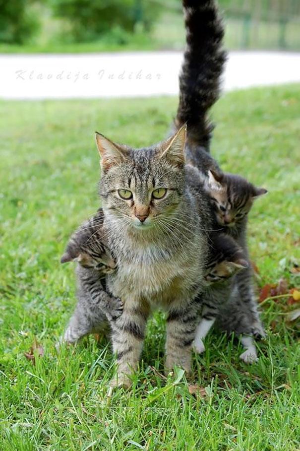 """Chân dung một """"bà mẹ bỉm sữa"""" điển hình. Sẵn sàng """"xù lông"""" bảo vệ con cái. (Ảnh: Internet)"""