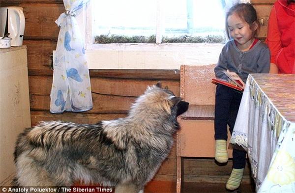 Cô bé nô đùa với chú chó sau sự việc kinh hoàng.