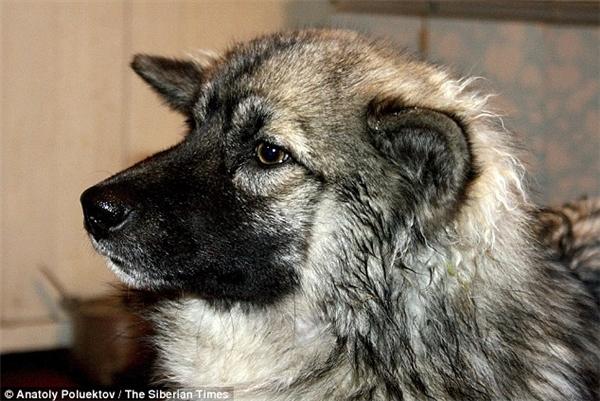 Chú chó Naida là người hùng tuyệt vời!