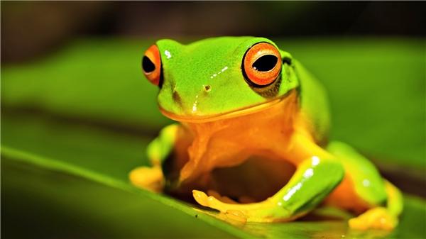 Chú ếch bị đột biến kì lạ và án tử treo lơ lửng cho loài người