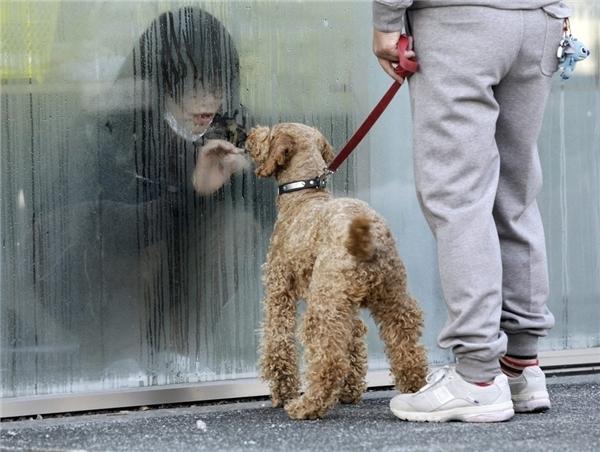 """Cô gái trong khu cách li dành cho người nhiễm phóng xạ đang ngắm nhìn chú chó của mình qua lớp kính ở Nihonmatsu, Nhật Bản vào 14/3. Dù đang trong trạng thái """"báo động"""", cô gái vẫn không thể nào quên được chú chó thân yêu của mình. Tấm kính trở thành vật ngăn cách, khiến khoảng cách tưởng chừngrấtgần trở nênxa xôi."""