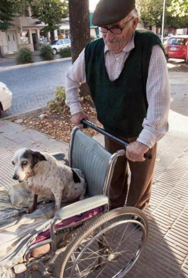 """Chú chó bị tật được người chủ đưa ra ngoài dạo chơi bằng xe lăn hằng ngày. Mặc dù chủ của nó cũng không còn """"trẻ tuổi"""" nữa, hai chân cũng không đủ vững, nhưng ông vẫn bằng lòng hi sinh cho niềm vui của """"người bạn""""thân yêu. Hạnh phúc đôi khi không cần là nhận, đó đơn giản chỉ là những điều bạn đã cho đi."""