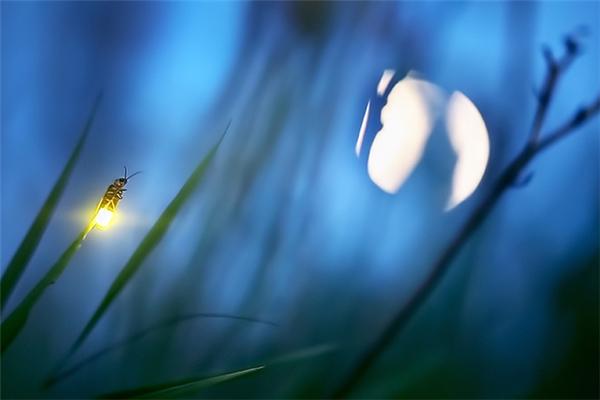 Ánh sáng của chúng còn rực rỡ hơn cả ánh trăng.