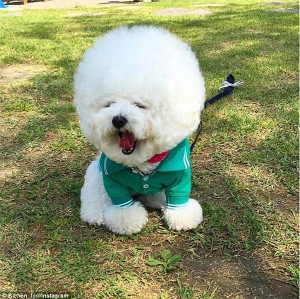 Đây là em chó đang gây sốt với biệt danh thú cưng quốc dân