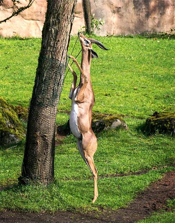 Những con vật ngớ ngẩn nhưng đúng là tuyệt tác của tự nhiên