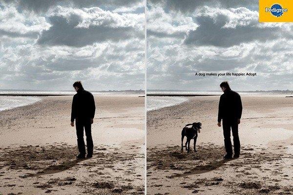 Khi bạn thấy cô độc, hãy nuôi một con chó.