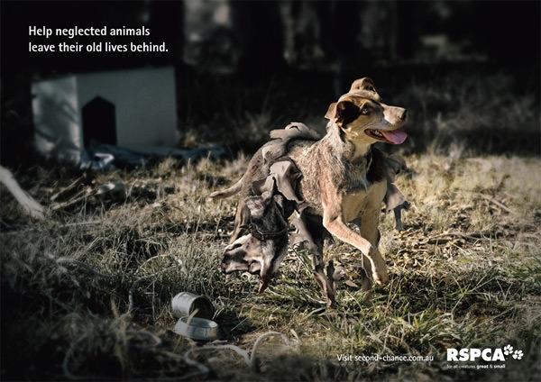 Hãy giúp những chú chó hoang trút bỏ kiếp sống tàn tạ đói khát. Chó hoang thì cũng chỉ là một sinh vật vô tội cần được bảo vệ và chăm sóc.