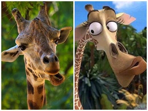 Chú hươu cao cổ ngốc nghếch Melmantrong phim Madagascar. (Ảnh: Internet)
