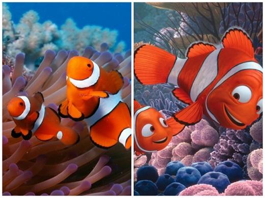 Cha con nhà Nemo trong bộ phim nổi tiếng Finding Nemo (Đi tìm Nemo). (Ảnh: Internet)