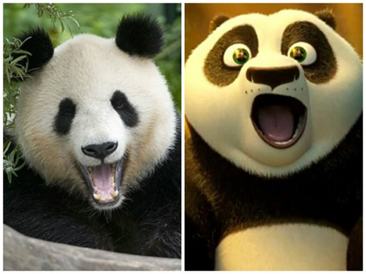 Ai nói gấu Po không có thật? (Ảnh: Internet)