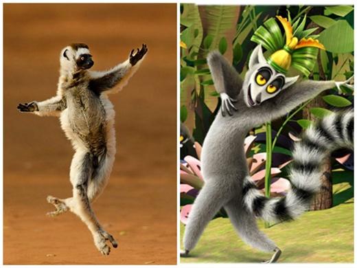 Ông vua tỉnh nhất hành tinh -Julian,Madagascar. (Ảnh: Internet)