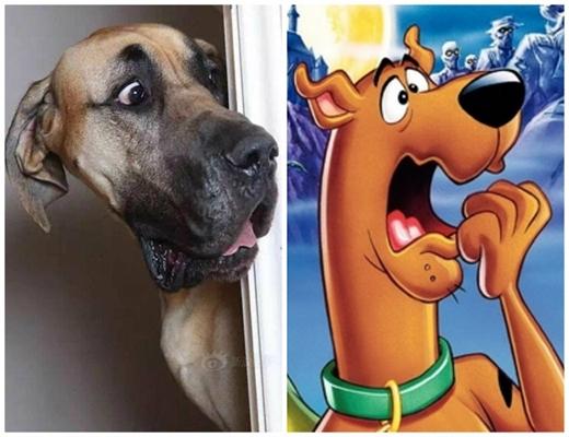 Cùng đọ xem mặt Scooby Doo nào ngốchơn? (Ảnh: Internet)
