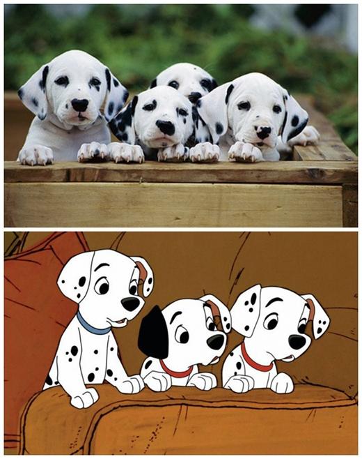 Nếu có 101 chú chó này ngoài đời, liệubạn có muốn nuôi? (Ảnh Internet)