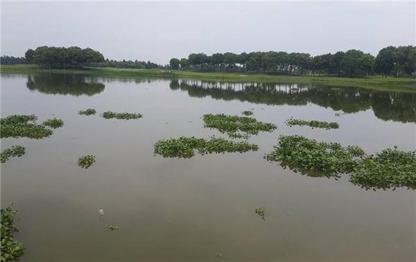 Hồ Vân Trì có diện tích lớn, nằm thuộc cả 3 xã tại huyện Đông Anh. (Ảnh: Internet)