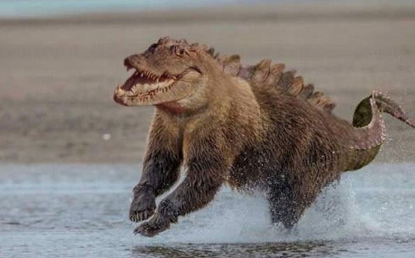 Trông con gấu cá sấu này tung tăng chạy nhảy dưới nước thật là vui và... đáng sợ.