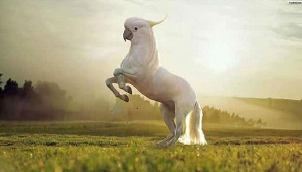 Thật tiếc khi chú ngựa đầu két này không có được cả đôi cánh. Nhưng không sao, khoa học vẫn phát triển từng ngày mà, em cứ đợi đi.