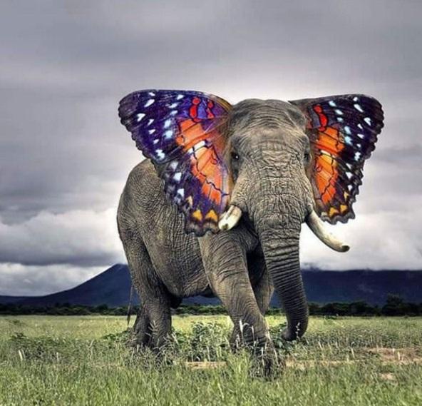 Nếu thực sự có chú voi đẹp thế này thì nhất định du khách sẽ ùn ùn kéo đến xin chụp hình mất thôi.