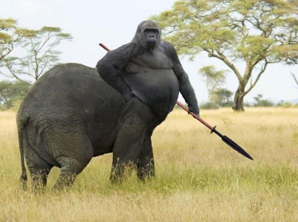 Nếu loài người lai được với ngựa thành nhân mã thì khỉ đột cũng lai được với voi thành... khỉ voi?