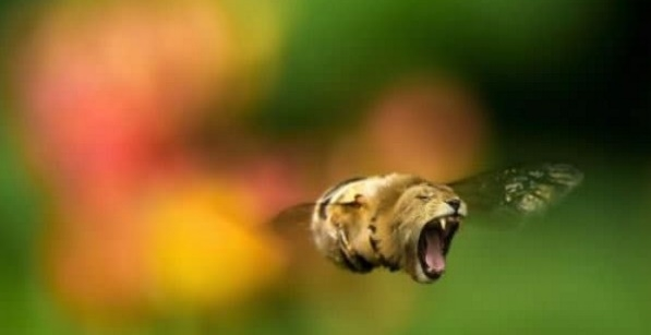 """Hóa ra con ong nhìn cận cảnh nó dữ dằn, """"hổ báo"""" vậy đây."""