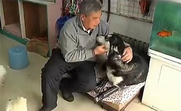Căm phẫn vì chú chó Husky bị thối rữa toàn bộ thịt ở cả 4 chân