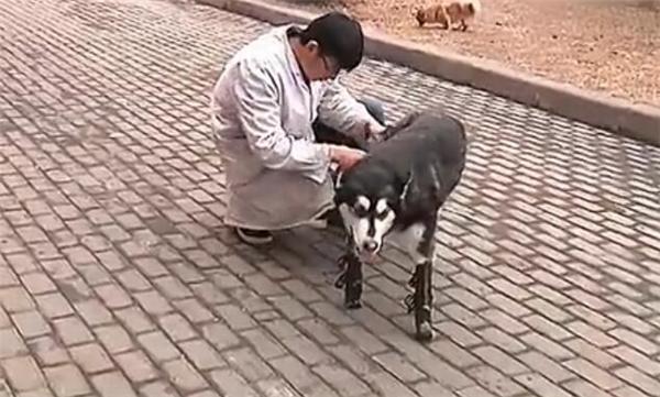 Ngoài Bác sĩ Lưu còn có trợ lý của ông là anh Tiểu Chu cũng góp phần không nhỏ trong việc giúp Đại Hắc hồi phục sức khỏe.
