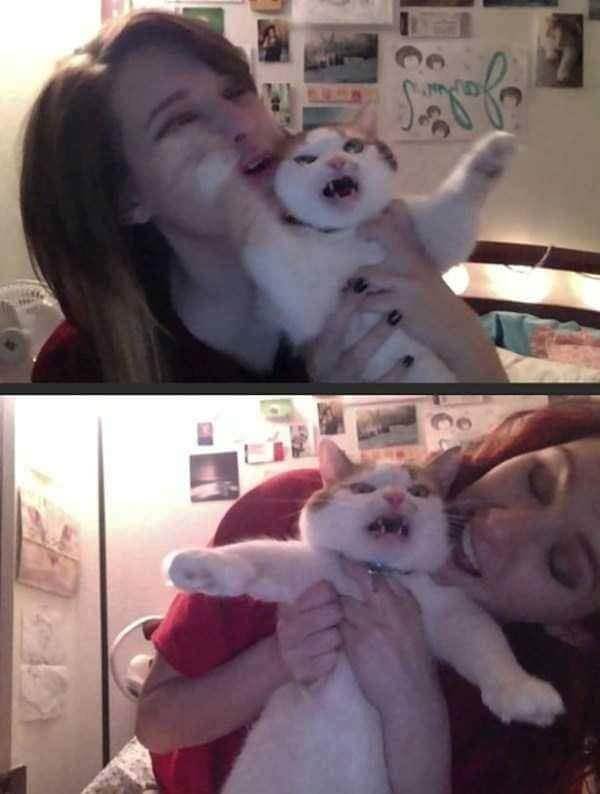 Khi nào thì con người mới nhận ra rằng xem mèo như thú cưng là một tội ác nhỉ?