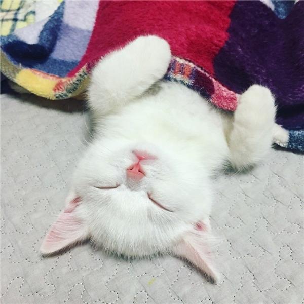 Trời lạnh quá, đắp chăn vô ngủ cho ấm mới được.