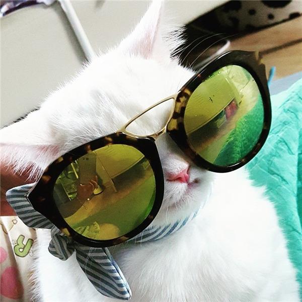 Fashionista mèo chính hiệu là đây.