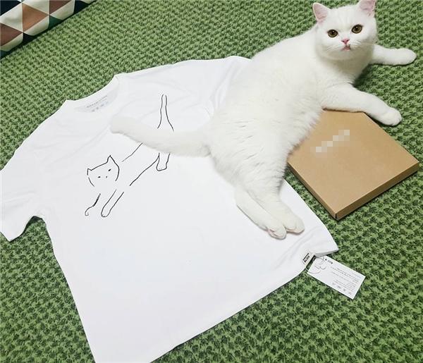 """Nhìn gì mà nhìn, chưa thấy """"mèo mập"""" bao giờ á?"""