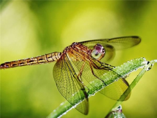 Bắt chuồn chuồn cũng là một trò vui gắn liền với thơ ấu của nhiều bạn nhỏ miền quê. (Ảnh Internet)