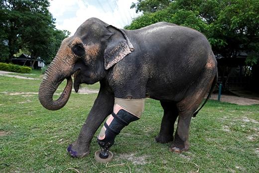 Motola năm nay đã 56 tuổi. Nó giẫm phải mìn vào năm 1999 trong lúc đi tải gỗ dọc biên giới Myanmar - Thái Lan.