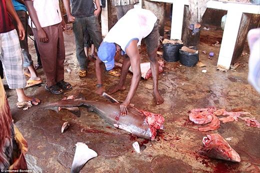 Khu chợmổ cá là một trong những điểm thu hút nhiều người nhất ở đây bởi ở đây bày bán những loại cá hiếm mà giá cũng phải chăng như cá mập, cá kiếm,...