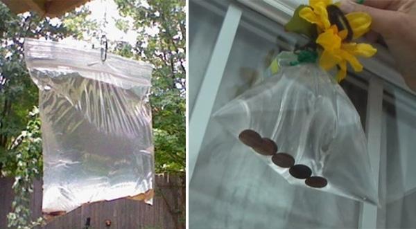 Giờ thì bạn có thể treo túi nước này ở bất kì nơi nào thường có ruồi nhé như treo ở bếp, cửa ra vào, ban công... (Ảnh: davidwolfe)