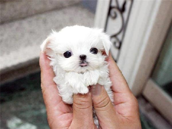 Cục cưng đáng yêu nhỏ bằng lòng bàn tay này, sẽ có người cho cưng cả thế giới đấy.