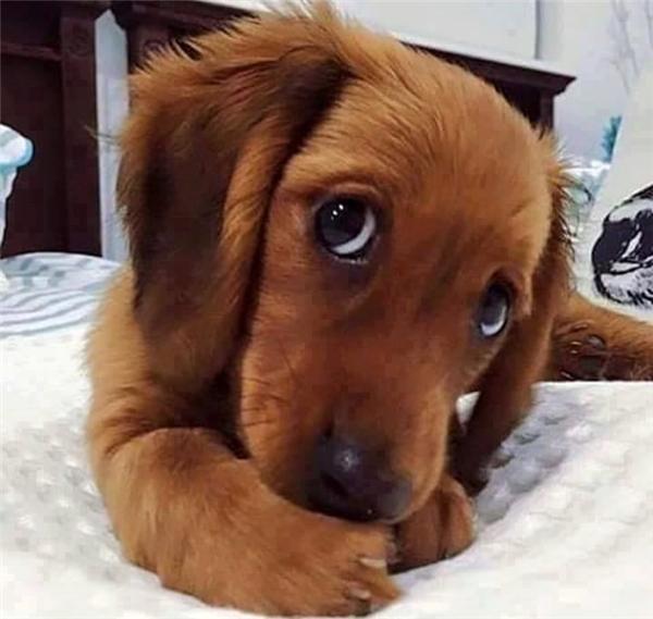 Hãy nhìn vào đôi mắt ấy, đau tim mà chết vì đỡ không nổi độ dễ thương, ngây thơ đấy.