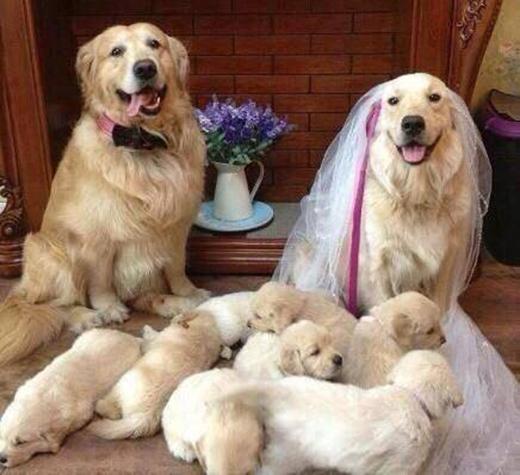 Phải có con rồi mới làm đám cưới để khoe tụi nhỏ với bà con họ hàng luôn.