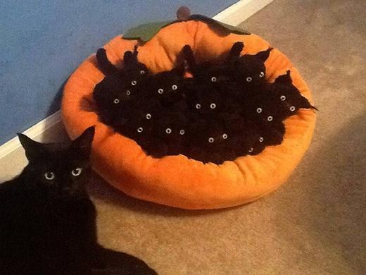 Con mèo này, tự cuồng mình đến mức chất đầy phiên bản mèo bông trên giường kìa.