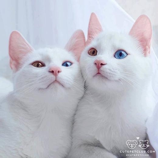 Chị em chúng mình mỗi mắt một màu như vầy là đủ chinh phạt cả thế giới rồi.