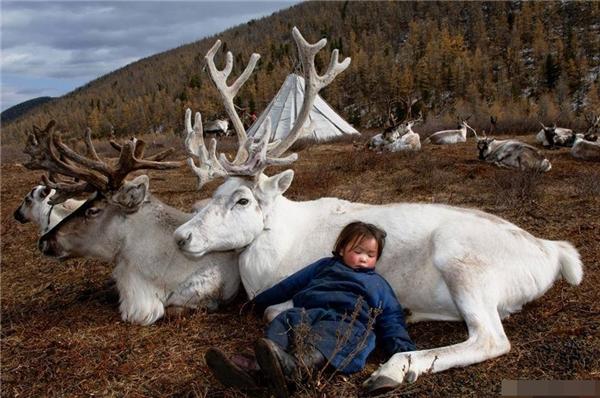 Tan chảy với loạt ảnh đáng yêu của em bé Mông Cổ bên động vật