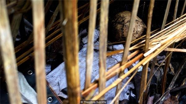 Ngôi làng kì quái với phong tục để xác chết tự phân hủy dưới gốc cây
