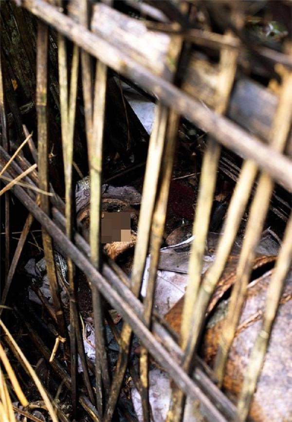 Thi thểđược đặt vào một chiếc lồnglàm từ tre và cành cọ,đặt dưới tán cây cổ thụ trong nghĩa trang để tự phân hủy.